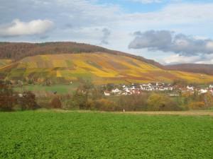 Weinberge in Horrheim
